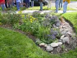 Stomrwater rain garden